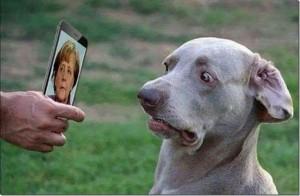 Merkel-Hund